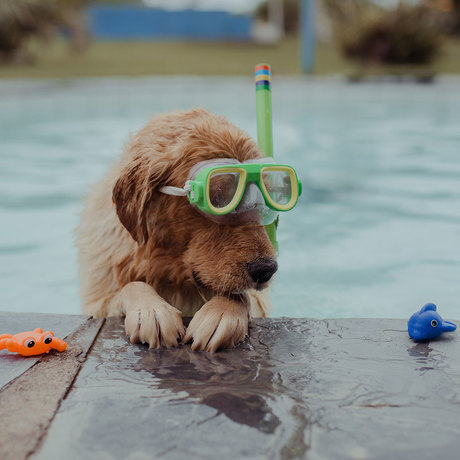 dog chilling at the pool